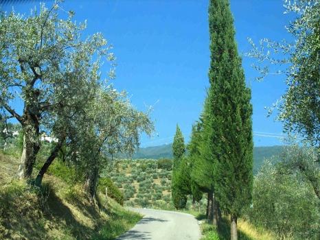 tuscany impressions near Lucca