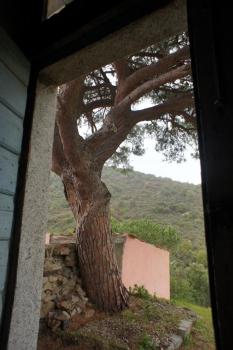 il gran pino