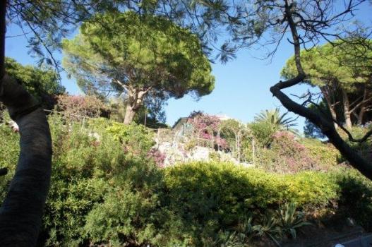 9 Casa, Giardino, Grande pino dal basso