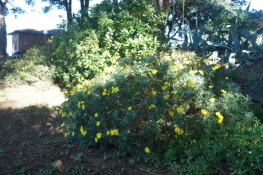fiori a SW