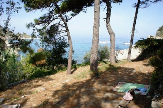 terreno pineta adiacente la spiaggia del Cotoncello a
