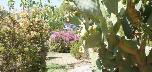 Garten Hinterseite  (1)dettaglio
