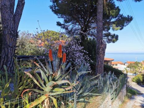 angolo di giardino con vista mare (1)