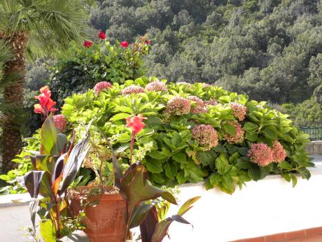 fiori e verde dappertutto