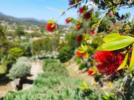 particolare-fiore-rosso